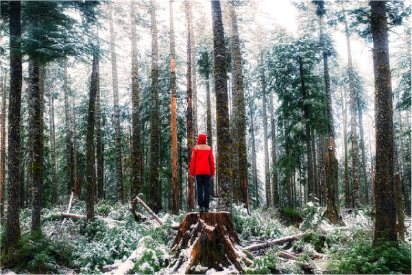 person in a snowy woods