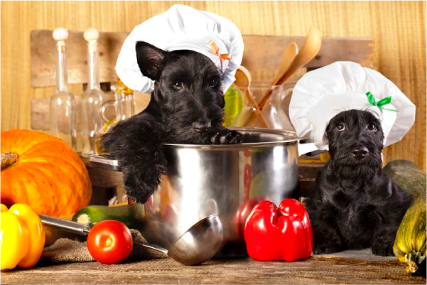dogs wearing cooking hat